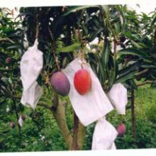 供应芒果套袋热带水果套袋批发