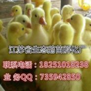 良种鹅苗价格图片