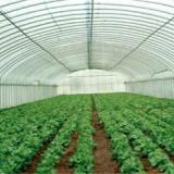 供应农业大棚种植