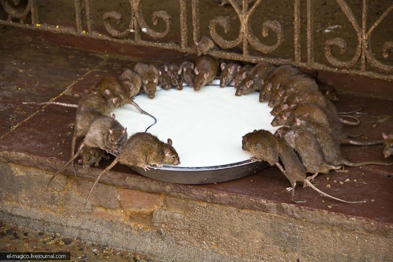 供应成都除虫公司成都绿卫灭鼠公司