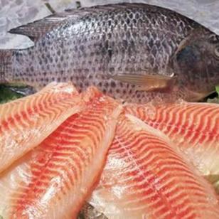 澳洲龙虾青岛虎桥提供水产鲜活食品图片