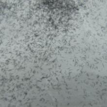 供应低价销售高温毛耐热涂料专用高温毛AS专用高温毛