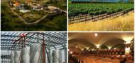 华夏盛世葡萄酒业有限公司