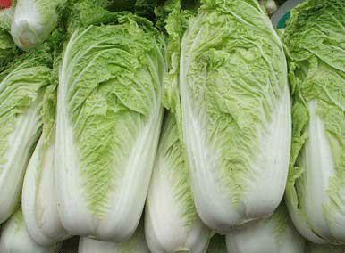 黑龙江白菜