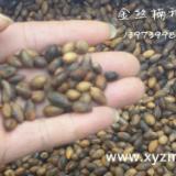 供应贵州金丝楠种苗哪里最多