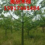 供应美丽木棉地苗,广东美丽木棉批发价,美丽木棉供应商,美丽木棉苗价格