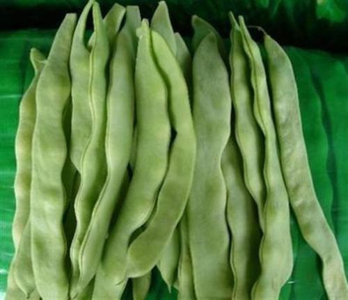无丝豆_无丝豆种植技术_莘县娄庄蔬菜水果产销基地