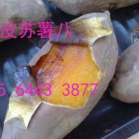 供应龙薯九,浙江烟薯25批发,龙薯九,蜜薯,遣138,北京553产地直供