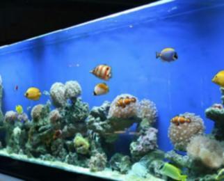 供应公司定做珊瑚海水缸配置制冷海水缸赠送小丑鱼喂养图片