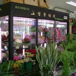 供应鲜花柜保鮮櫃鲜花展示柜