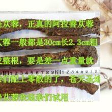 供应苁蓉内蒙古阿拉善苁蓉肉苁蓉批发