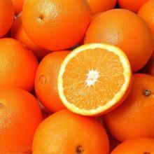 供应冰糖橙,冰糖橙批发图片