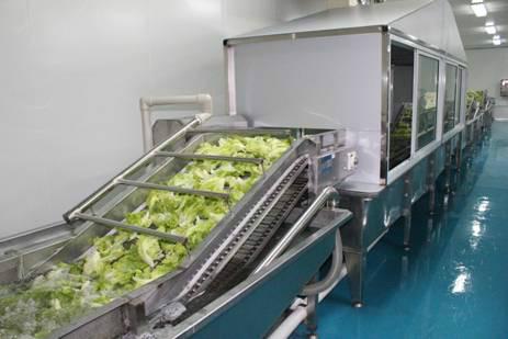 新鲜蔬菜图片/新鲜蔬菜样板图 (2)