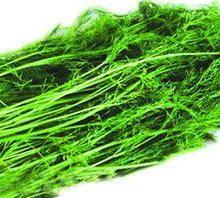 供应茴香清洗机小型蔬菜清洗机厂家清洗机质量清洗机厂家HQL-2500