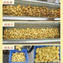 供应土豆清洗机  根茎类清洗机   土豆毛辊清洗机