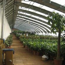 供应保定温室大棚 保定温室大棚,河北文志刚农业开发