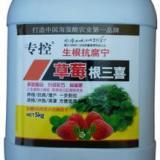 供应防治草莓根腐病红中柱根腐病黑根病好农药