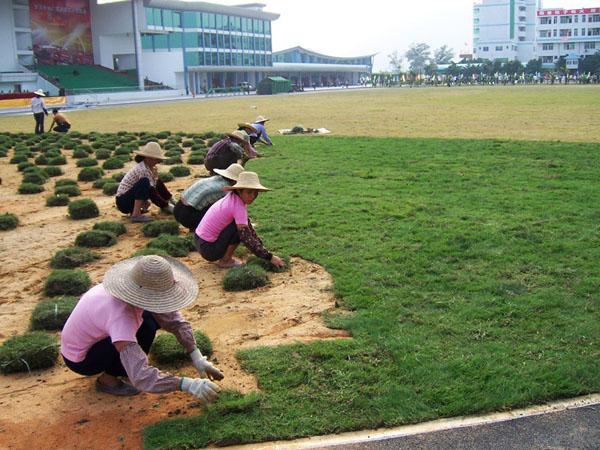 南宁小区绿化南宁庭院绿化 就找绿化工程