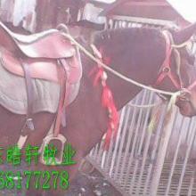 广东供应用于农用的马骡养殖价格,新疆西门塔尔牛基地批发
