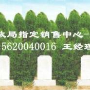 植树葬树葬专区图片