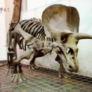 恐龙骨架标本l恐龙化石l电影道具图片