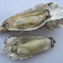 供应用于:平肝潜阳牡蛎提取物