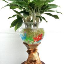 供应电子水培花盆.水培花瓶,营养液