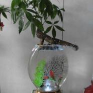 新型水培花瓶图片