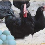绿壳蛋成品鸡图片