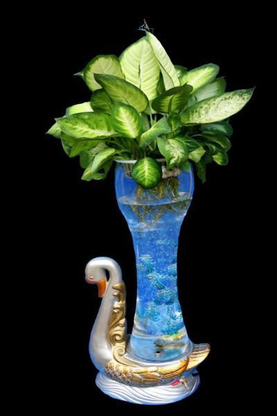 来宾玻璃花瓶水培图片_来宾玻璃花瓶水培图片大全__一图片