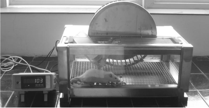 供应小动物跑轮系统跑轮实验系统大鼠转轮式跑步机