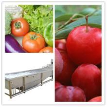 供应果蔬加工设备气泡清洗机