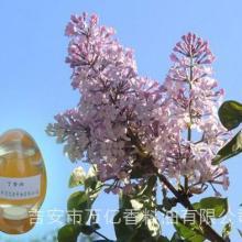 供应用于的厂家直供原料丁香油价格