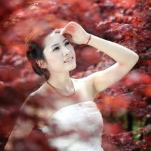 供应上饶一季红枫,抚州一季红枫种子,宜春一季红枫厂家,吉安一季红枫苗批发