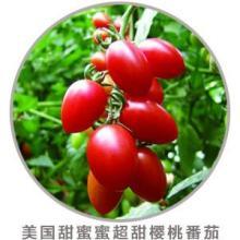 供应进口西红柿樱桃番茄农场进口番茄批发特色番茄基地小番茄种植图片