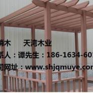 上海红梢木市场价格图片