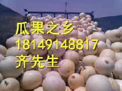 供应陕西香瓜