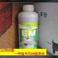 种植专用EM益生菌菌液图片