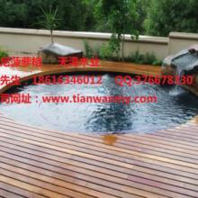 供应用于室内户外防腐的青岛印尼菠萝格地板批发 木桥、花架、休闲桌椅、户外专用地板防腐木