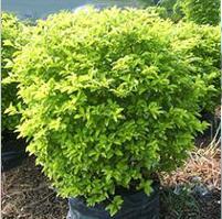 好的木本植物——福建最好的木本植物木本植物骠