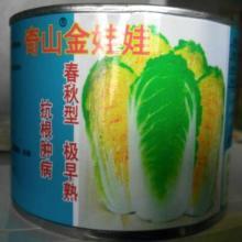 供应用于蔬菜基地的早熟迷你型白菜种子 奇山金娃娃白批发