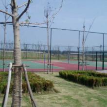 供应球场围网围网建造球场灯光设施