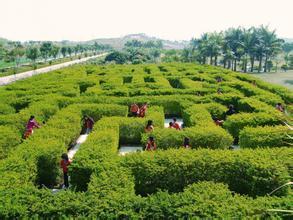 青岛绿化工程青岛绿化工程玣