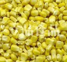 供应冻干甜玉米代加工诸城冻干机供应商诸城冻干机价格批发