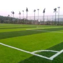 供应足球场、篮球场、排球场、乒乓球、排球等球场用品、施工、设计、改造批发