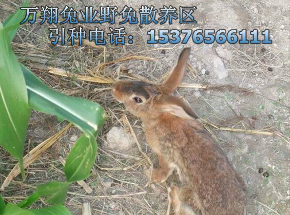 超声波抓野鸡野兔视频